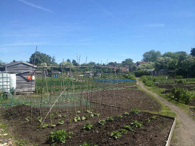 Jubilee Way (SM2) passing through allotments in the heart of the village.